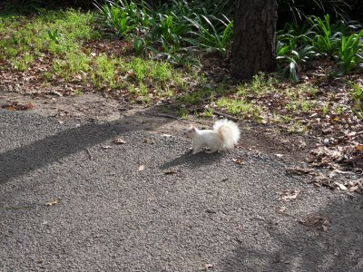 Frosti The Terrorist Albino Squirrel